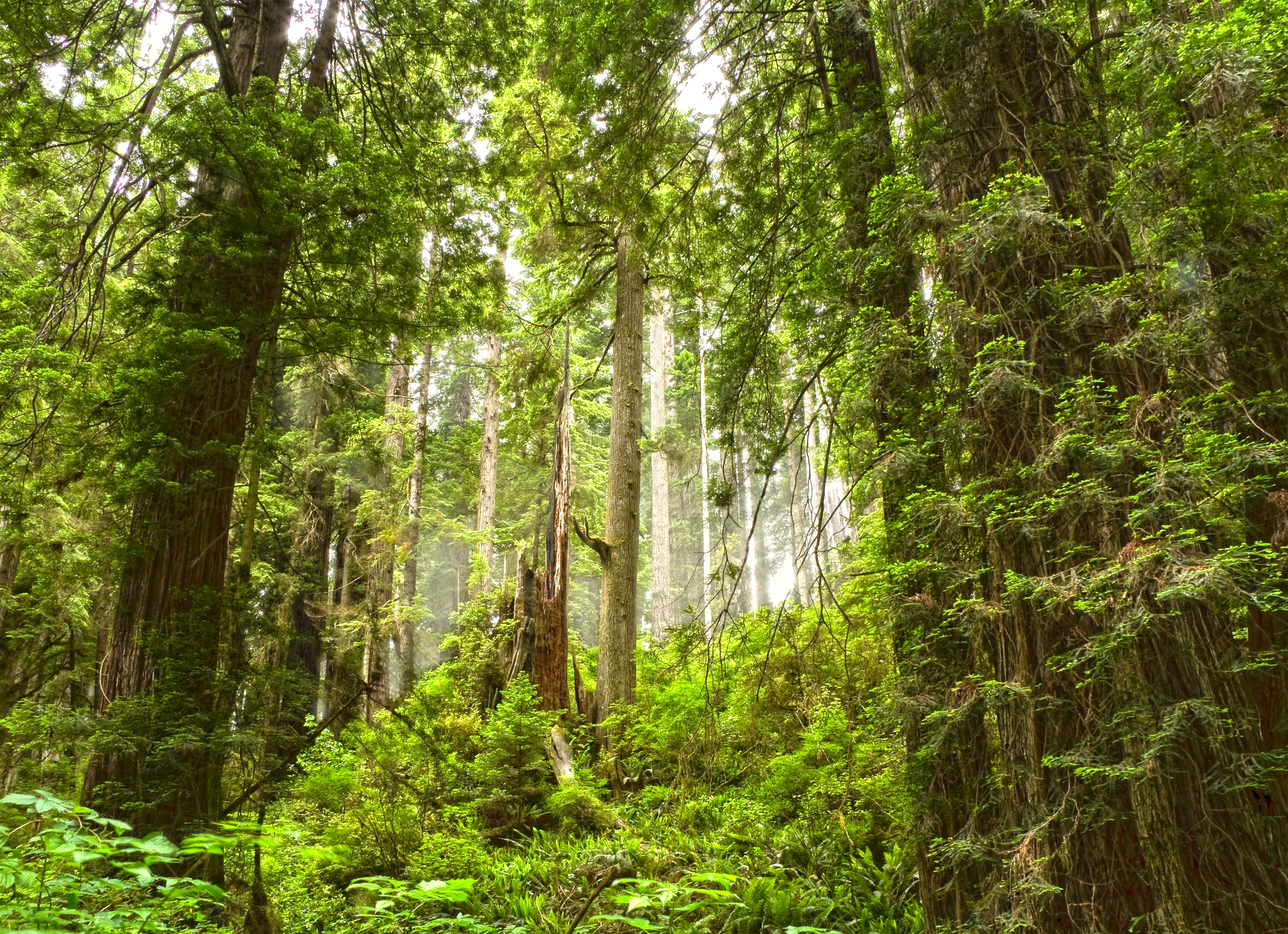 Redwoods Ossagon Trail_MG_7899