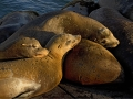 Sleepy Sea Lions_MG_9009